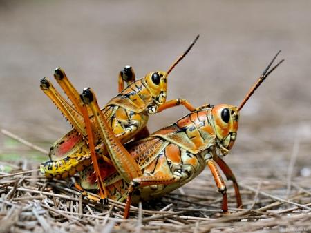 Секс у насекомых